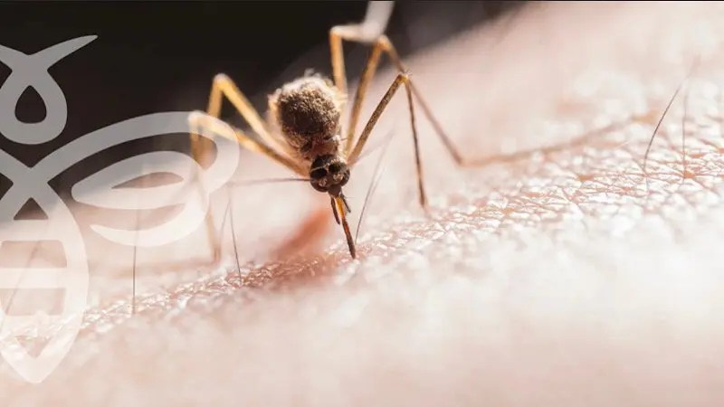 Surveillance Leads to Adult Mosquito Control in Mohave Valley