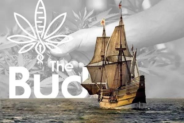 Hemp seeds arrived by the Mayflower?