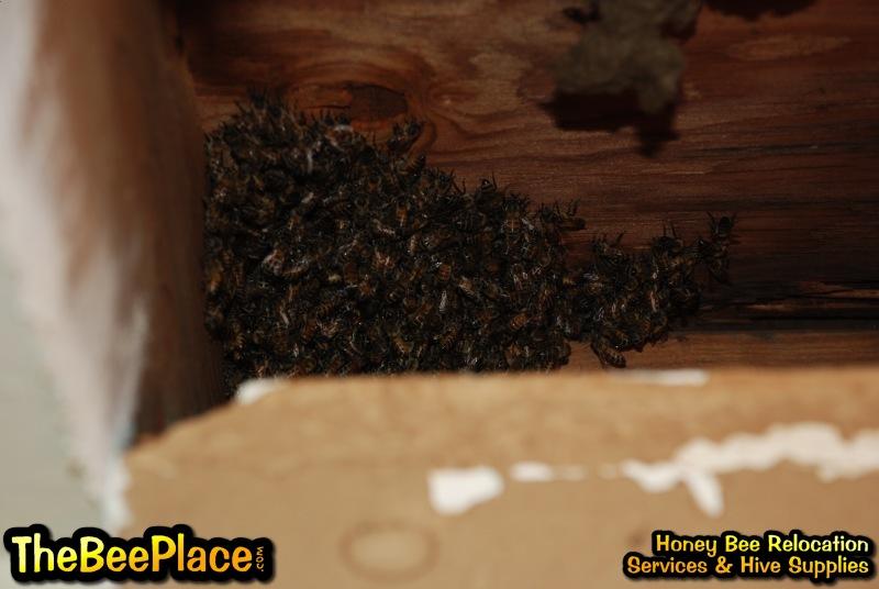 apartment ceiling live honey