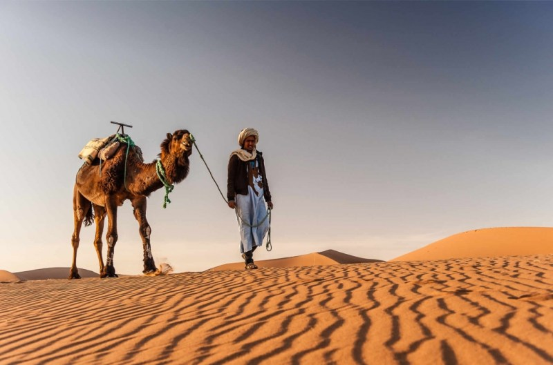 Camel Trek in Sahara
