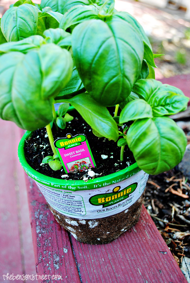 Easy to Plant Herbs with Home Depot and thebensonstreet.com