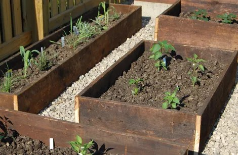 5 Vegetables You Should Be Planting Now
