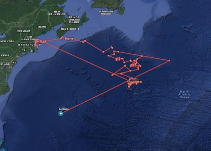 Say Hello To Migratory Sharks With OCEARCH