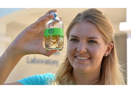 Unraveling the Microbial Mysteries of Sargassum Seaweed – Doctoral student at BIOS investigates how algae survives in low-nutrient environments