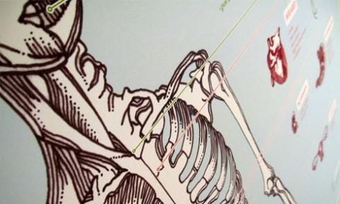 skin and bones medical diagram skeleton