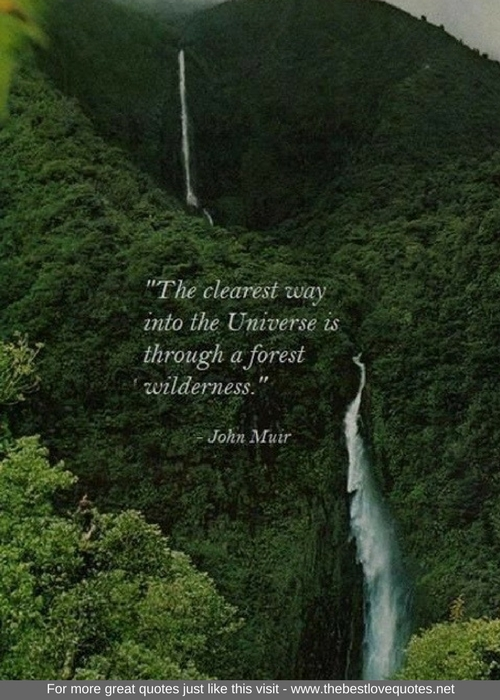Forest Quotes Simple Inspirational Quotes The Best Love Quotes