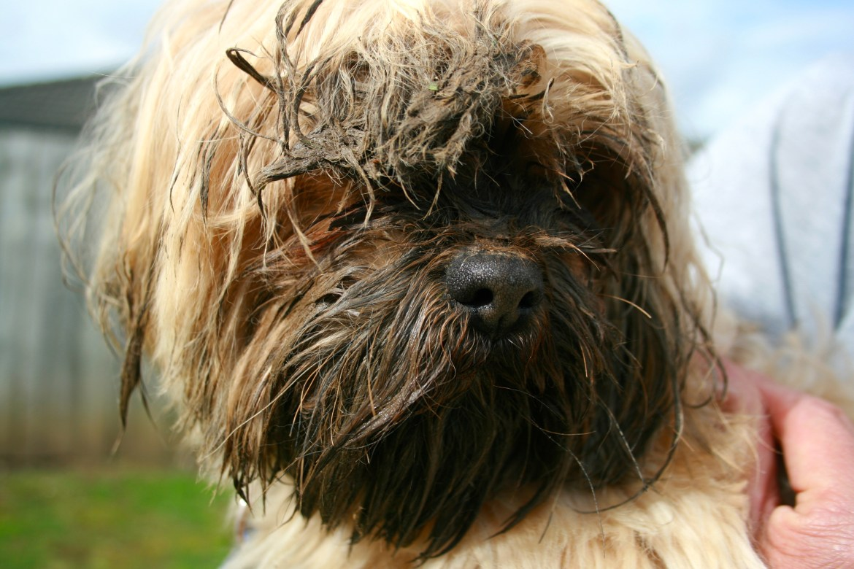 Muddy_dog