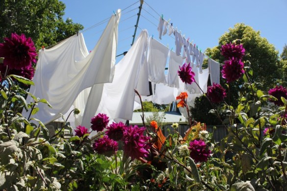 Washing_Drying_on_the_line