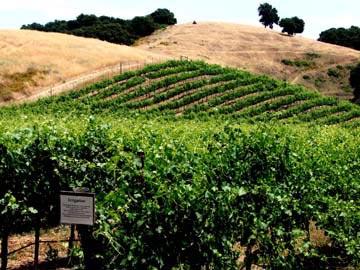 Pipestone vineyard west.jpg