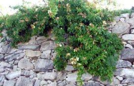 Tablas Creek wall.jpg