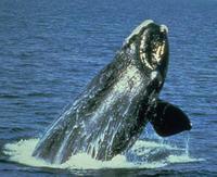 whale.35.jpg