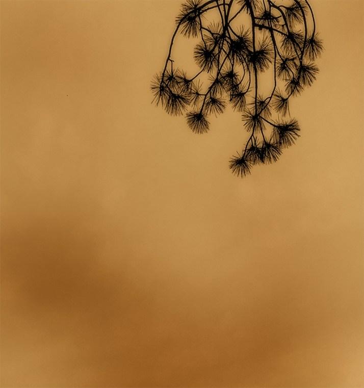 branchyyyy