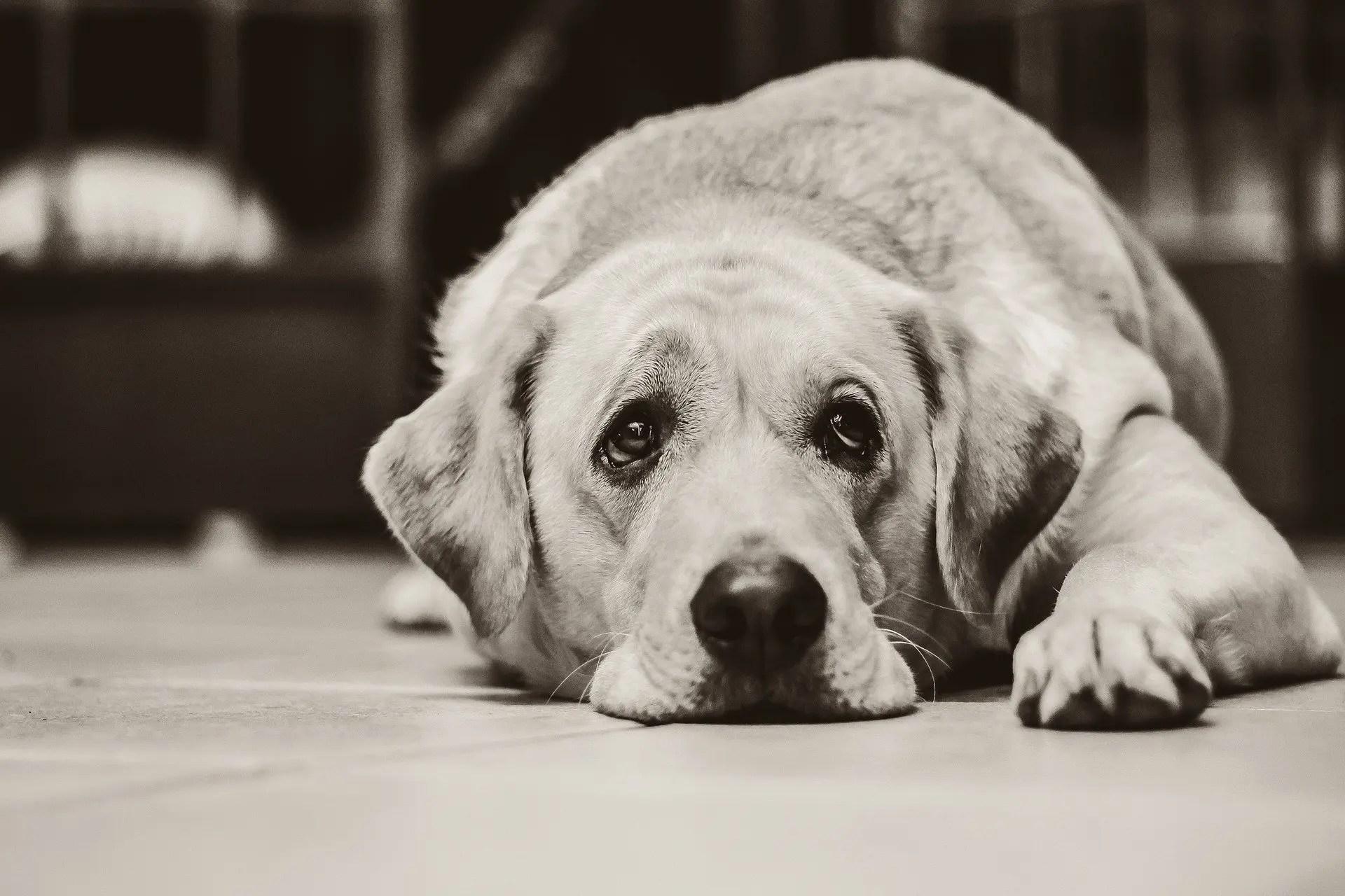 Il mondo emozionale del cane