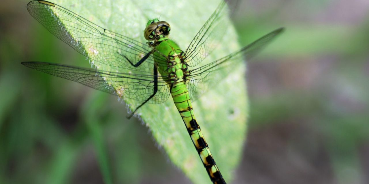 Three-quarters of flying insects have disappeared, scientists say