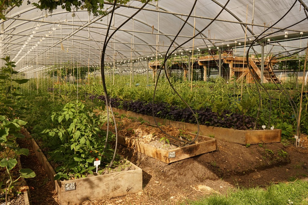 A polytunnel at Bec Hellouin