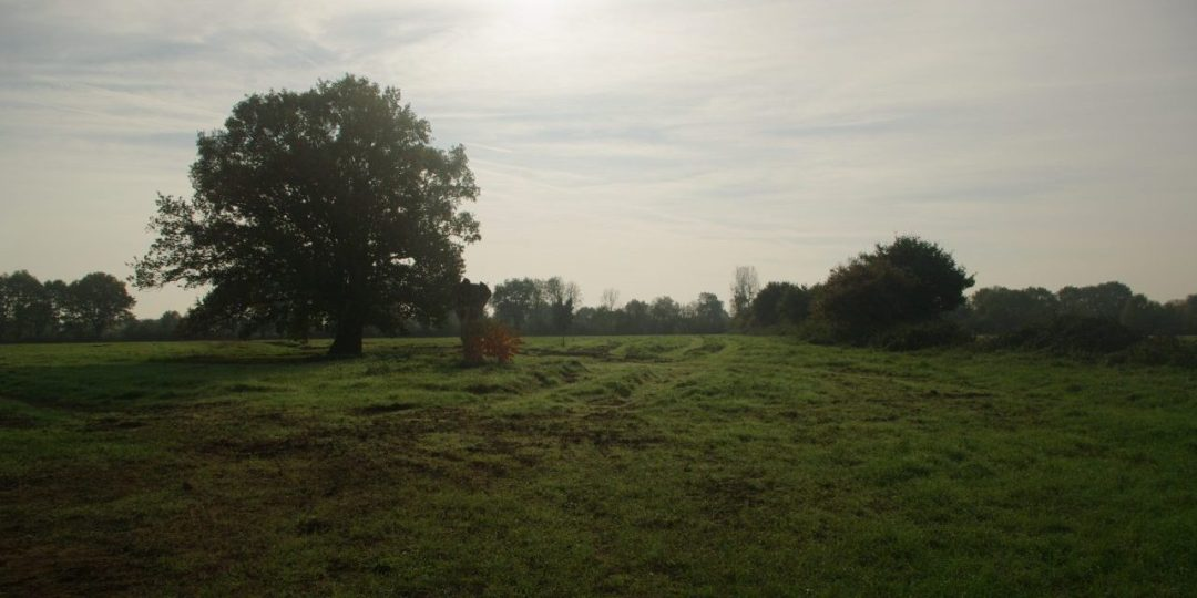 The trees in our field