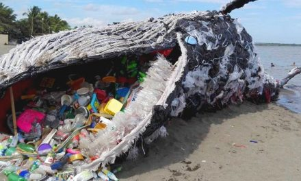 Whales and sharks are particularly at risk from ingesting plastic, say scientists