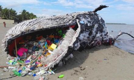 Les baleines et les requins sont de plus en plus exposés au plastique dans les océans