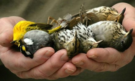 France's bird population crashes by a third in 15 years