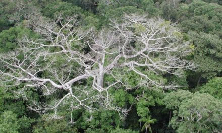 Drought is killing the Amazonian rainforest – new growth isn't emerging fast enough to replace it