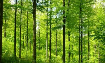 Research shows a trillion trees could be planted to capture huge amount of carbon dioxide