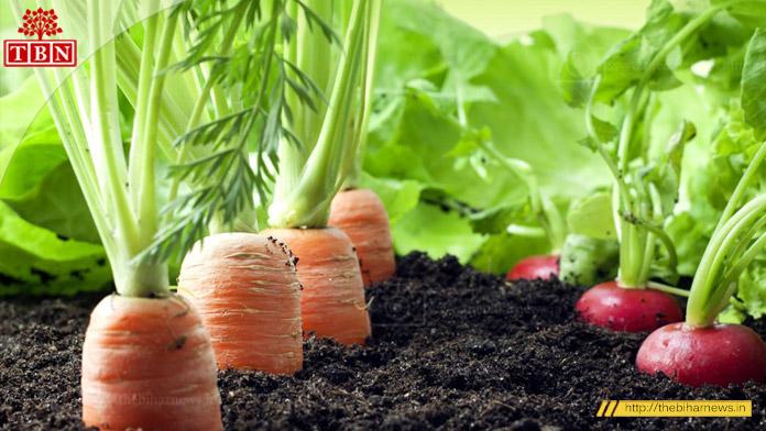 organic-farming-patna-bhagalpur-road-the-bihar-news