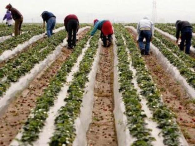 America migrant workers california