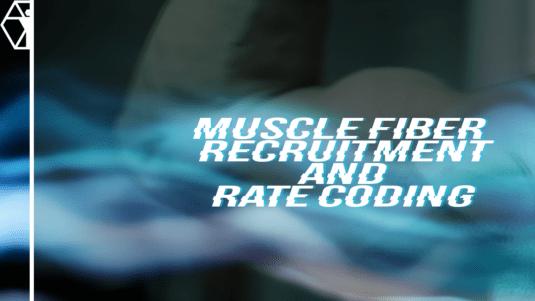 Muscle Fiber Recruitment