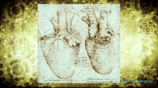 Leonardo Da Vinci Heart