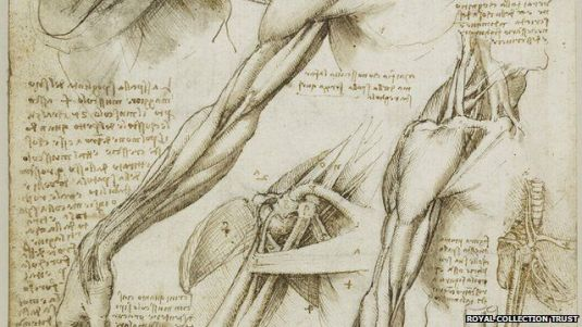The Fascia as drawn by DaVinci