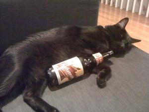 Riley_cat_drinking