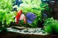 shark aquarium meditation