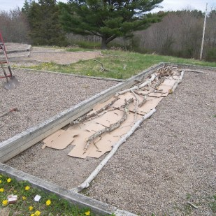 Lay down cardboard to block weeds