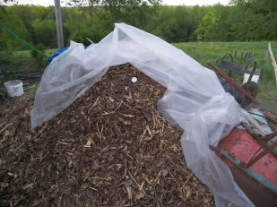 Compost water heater