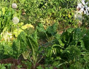 Chard, lettuce, flowering leeks