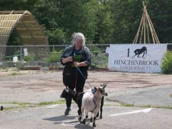 Pigmy goats!