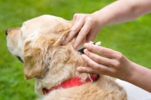 spot on flea treatment