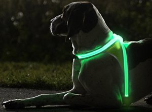 light up harness from Noxgear
