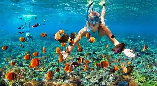 Snorkeling Miami Beach