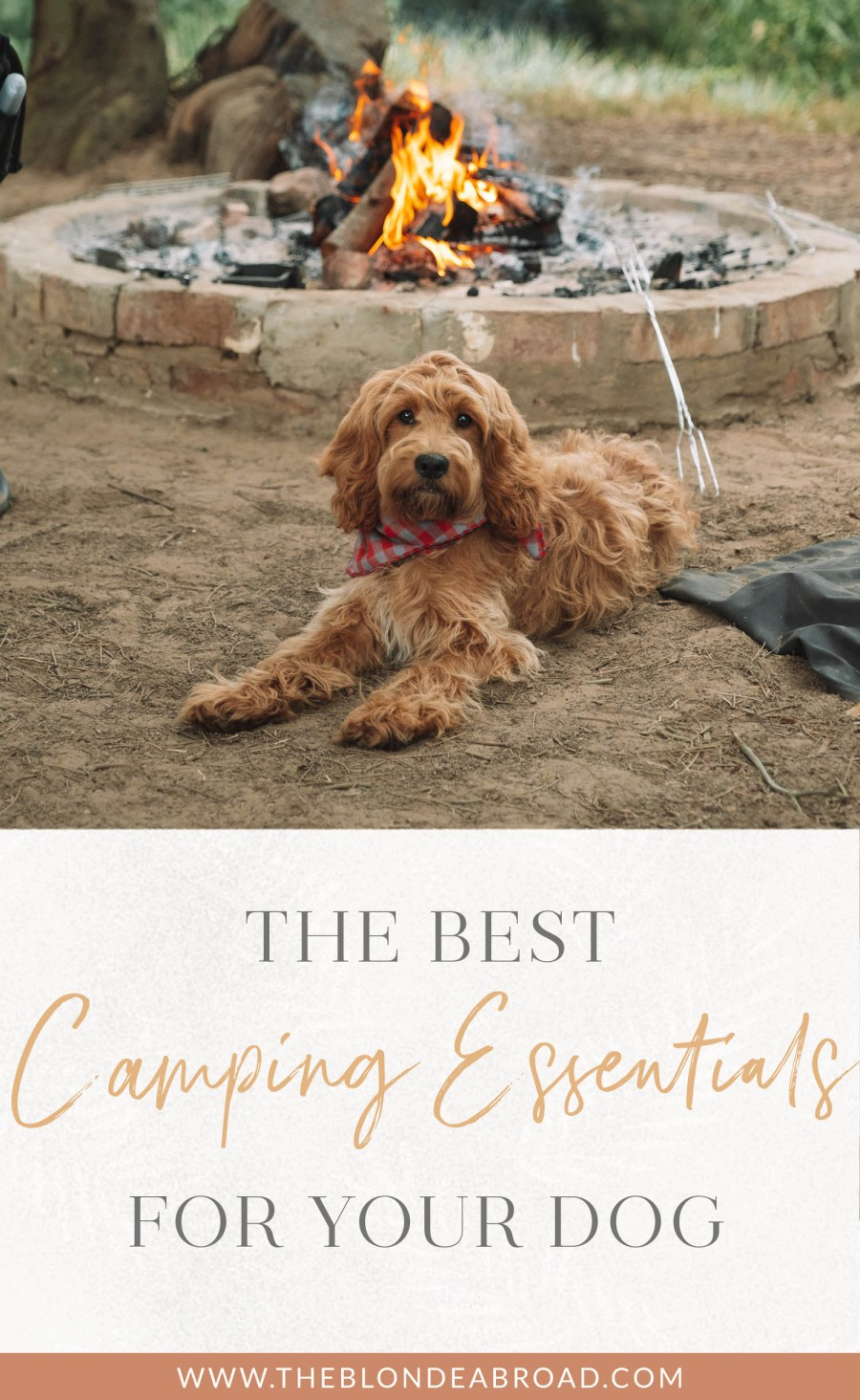 Camping Essentials for Your Dog