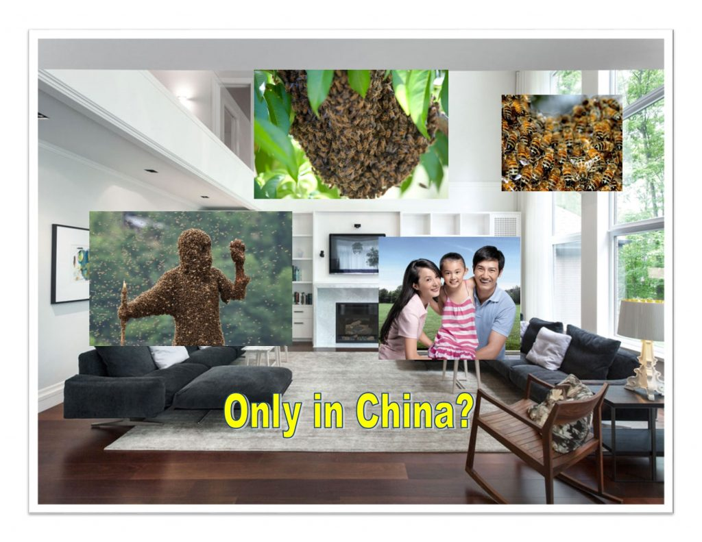 Family in China Lives With Beehive in Living Room for Over 12 Years