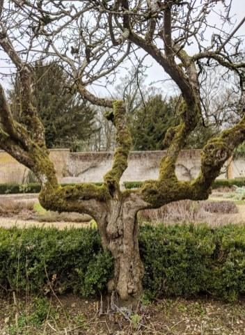 Garden Chawton