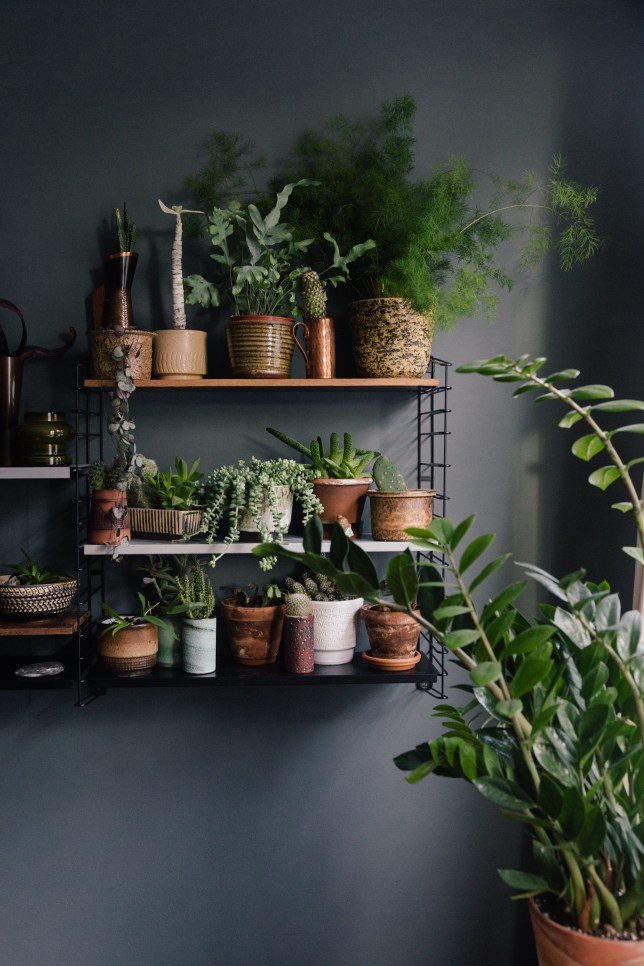 houseplants, tomado shelving, grey wall