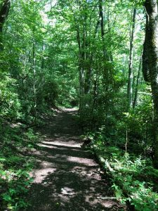 Hiking the Cataloochee Divide Trail