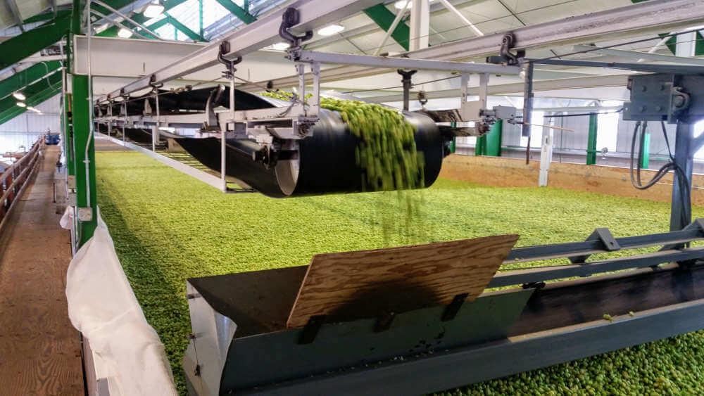 Visiting Goschie Farms for hops, 2017