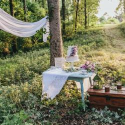 who wouldn\\\'t want cake in the forest?