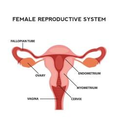 fertility in women [ 1181 x 1181 Pixel ]