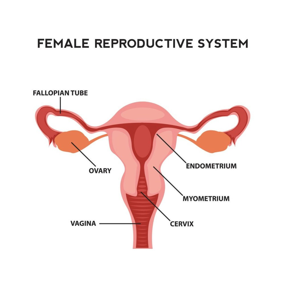 medium resolution of fertility in women