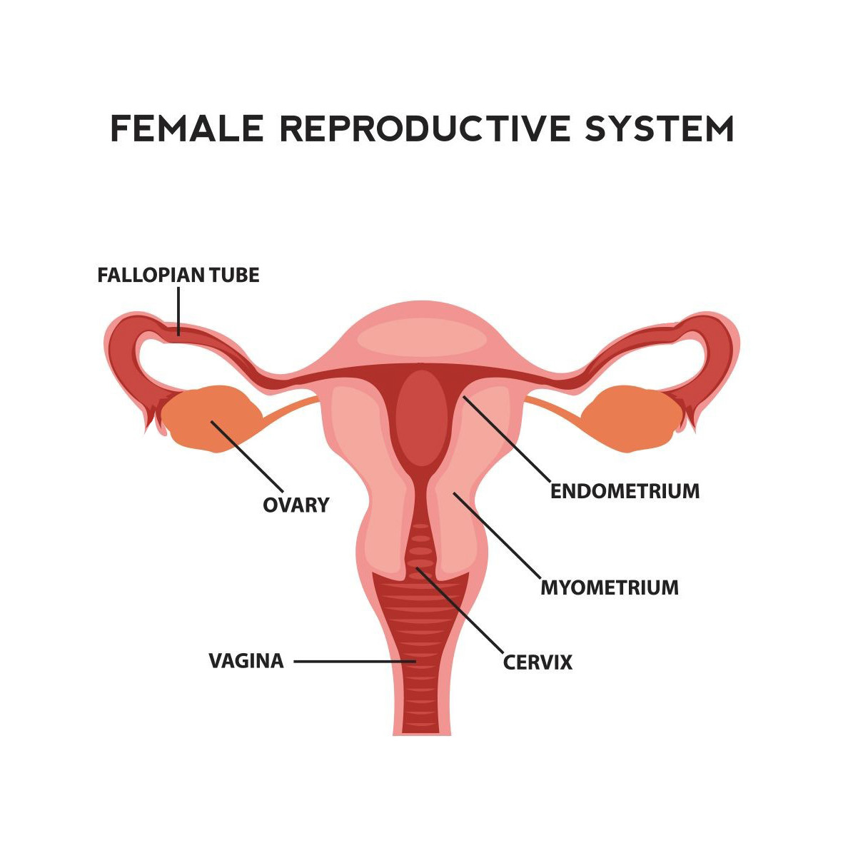 hight resolution of fertility in women