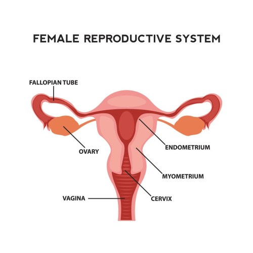 small resolution of fertility in women